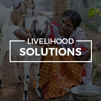 menu-livelihood-solutions